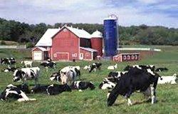 fam farm w cows