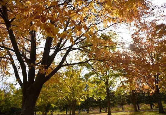 fall_leaves.jpg
