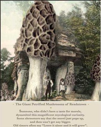 Craig giant petrified mushroom