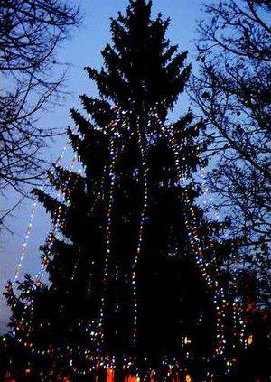 city park tree