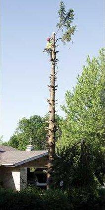 1B tree 3