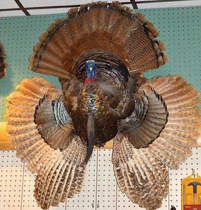 bullseye turkey
