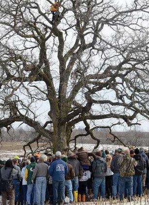 Hirsch in That Tree