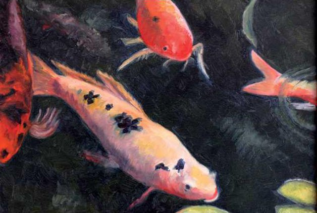 koi for web