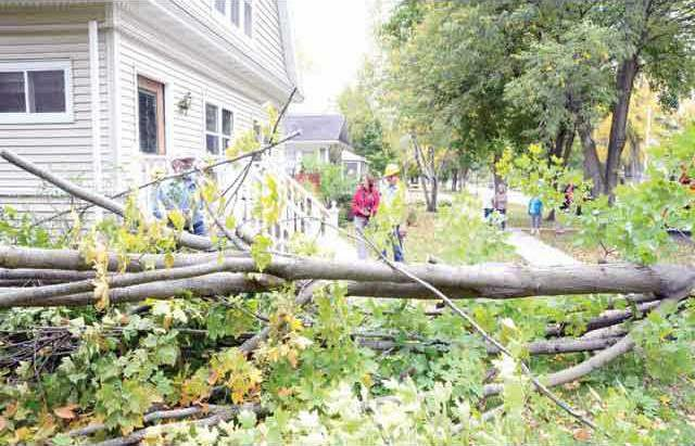 tree-falling