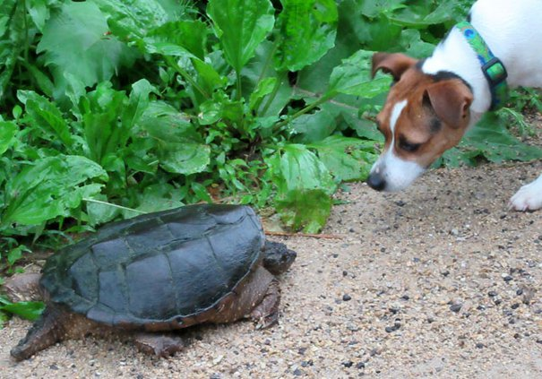 Turtle and Finn