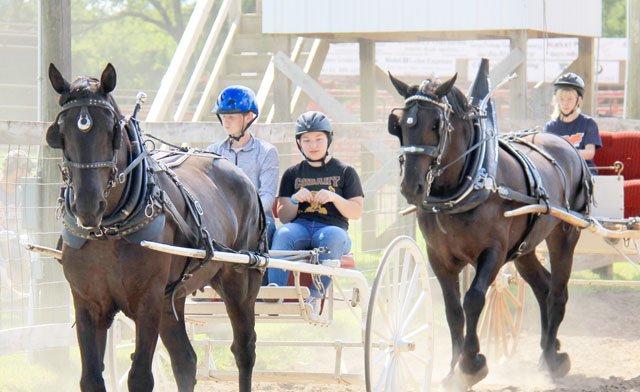 FAIR_HORSE AWARD
