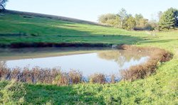 Brush Creek_manure in Amish Pond